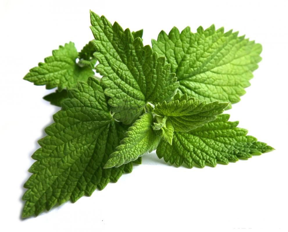 Mint tips - Tips planting herbs lovage parsley dill ...